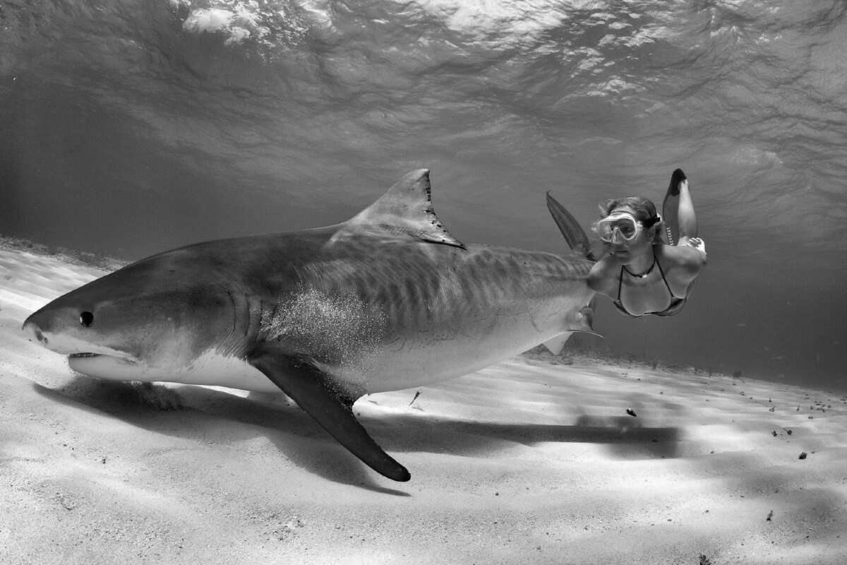 Liz Parkinson- Fierce Freediver and Shark Activist 1