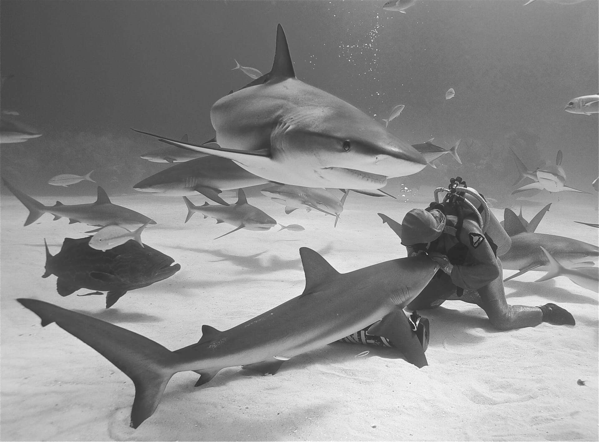 Cristina Zenato—Fierce Female Shark Professional and Ocean Entrepreneur 5
