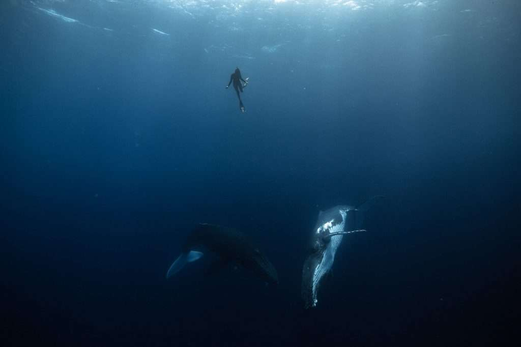 Surf Leotard in action whilst swimming with whales- Go SLO, Live Creative